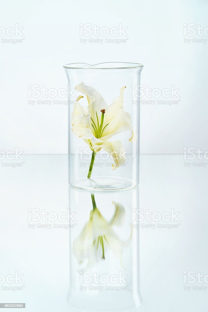Laboratório. Vidro transparente com flor - Foto de stock de Bioquímica royalty-free