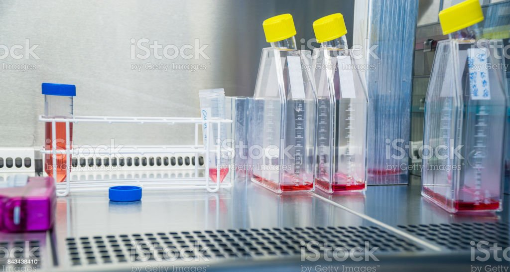 Laboratory work at the steril bank with cell culture flasks and tubes. Cell splitting work. stock photo