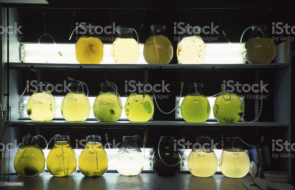 Labortory flasks royalty-free stock photo