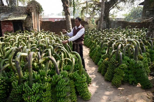 Arbeiter tragen Banane auf dem Bananenmarkt Von Anggiri – Foto