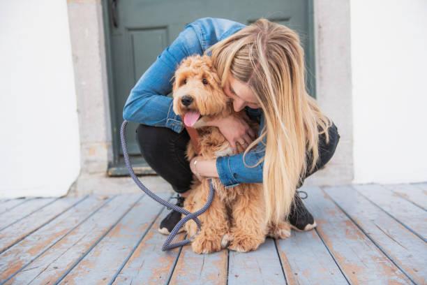 labradoodle hund och kvinna utanför på balkongen - animal doodle bildbanksfoton och bilder