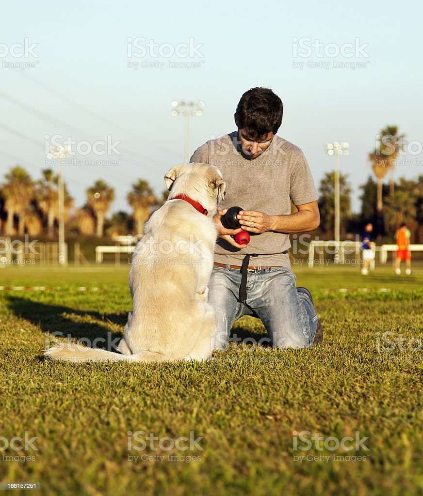 Labrador Dog and Trainer with Chew Toys in Park royalty-free stock photo