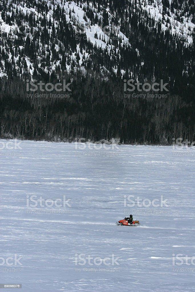 Labrador foto de stock libre de derechos