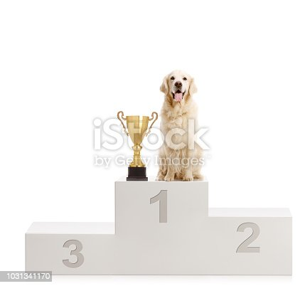 istock Labrador retriever dog standing with a trophy on a winner's pedestal 1031341170
