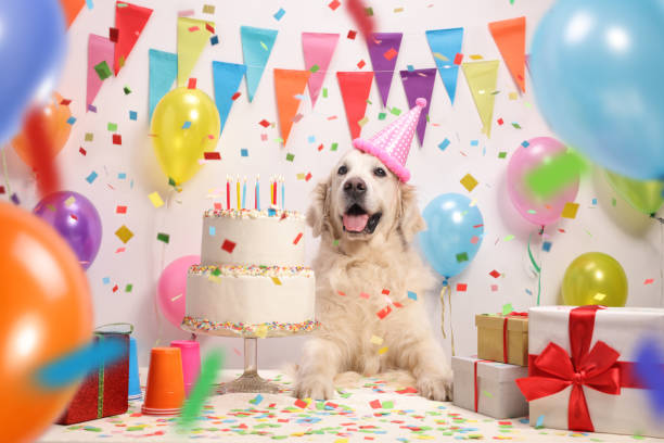 Labrador retriever dog with a birthday cake - foto stock