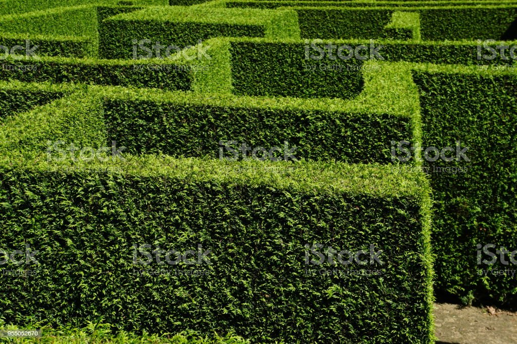 maze of green hedges in hard sunlight, overview, wide angle, high...