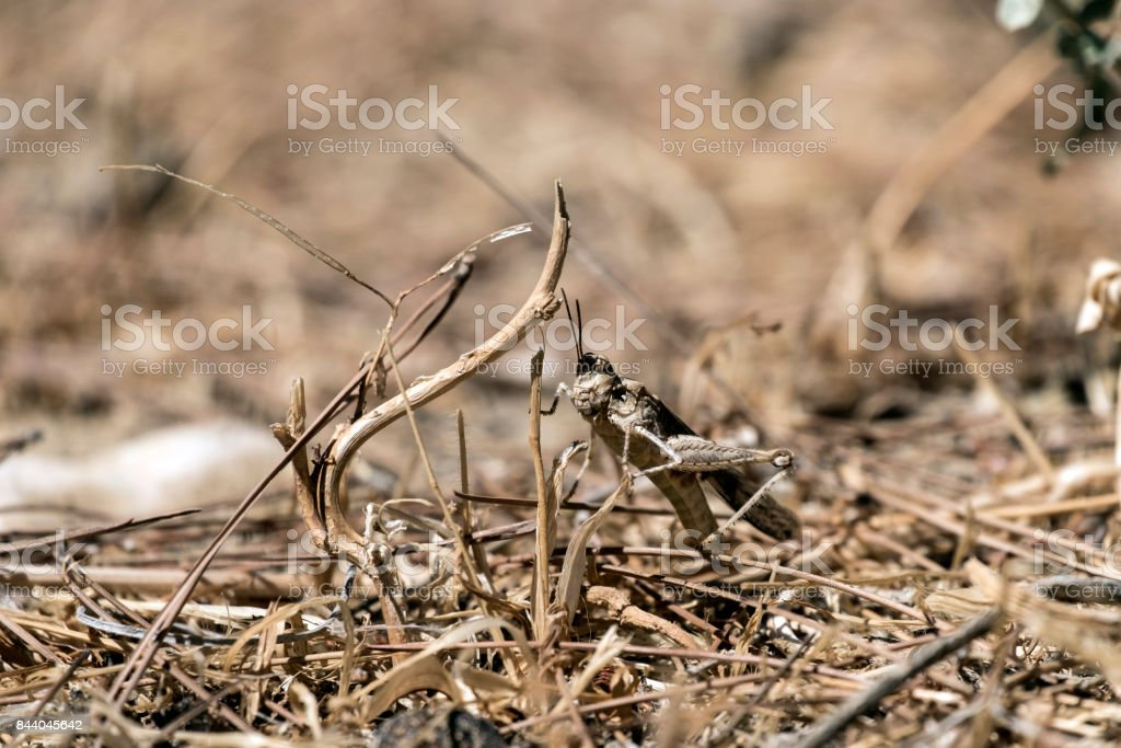 Labyrinth spider hides between stones (Agelena labyrinthica) stock photo