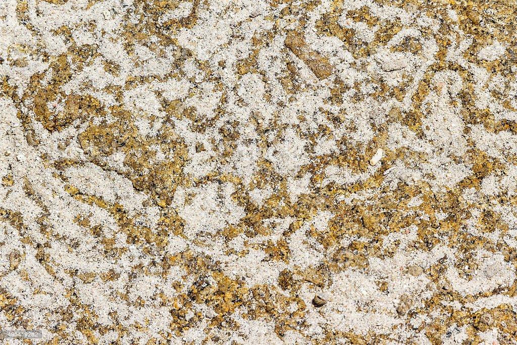 Labyrinthine paths of marine gastropods stock photo