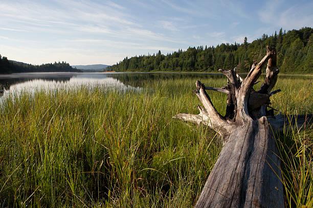 grand lac - Photo