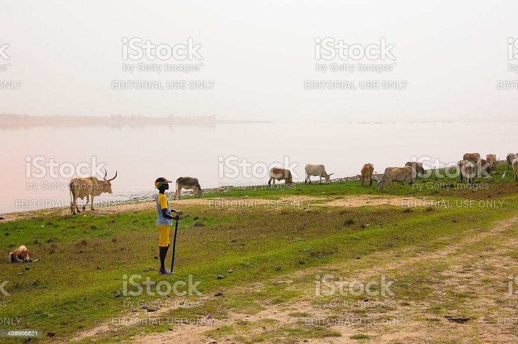 Lac Rose Cattle Herder In Senegal royalty-free stock photo