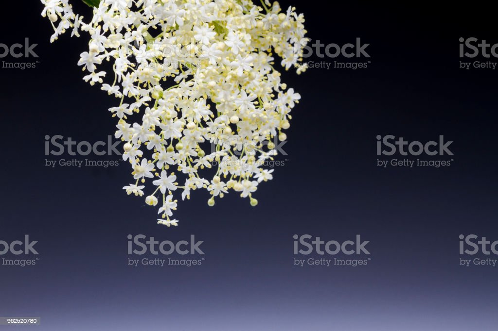 lace of small white flowers with a blue background - Royalty-free Abstract Stock Photo
