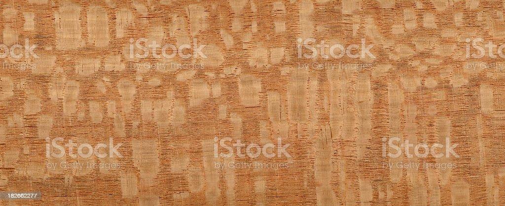 lacewood silky oak royalty-free stock photo