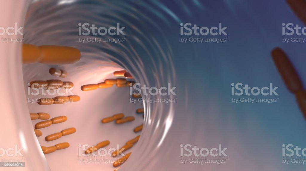 Lactobacillus acidophilus stock photo