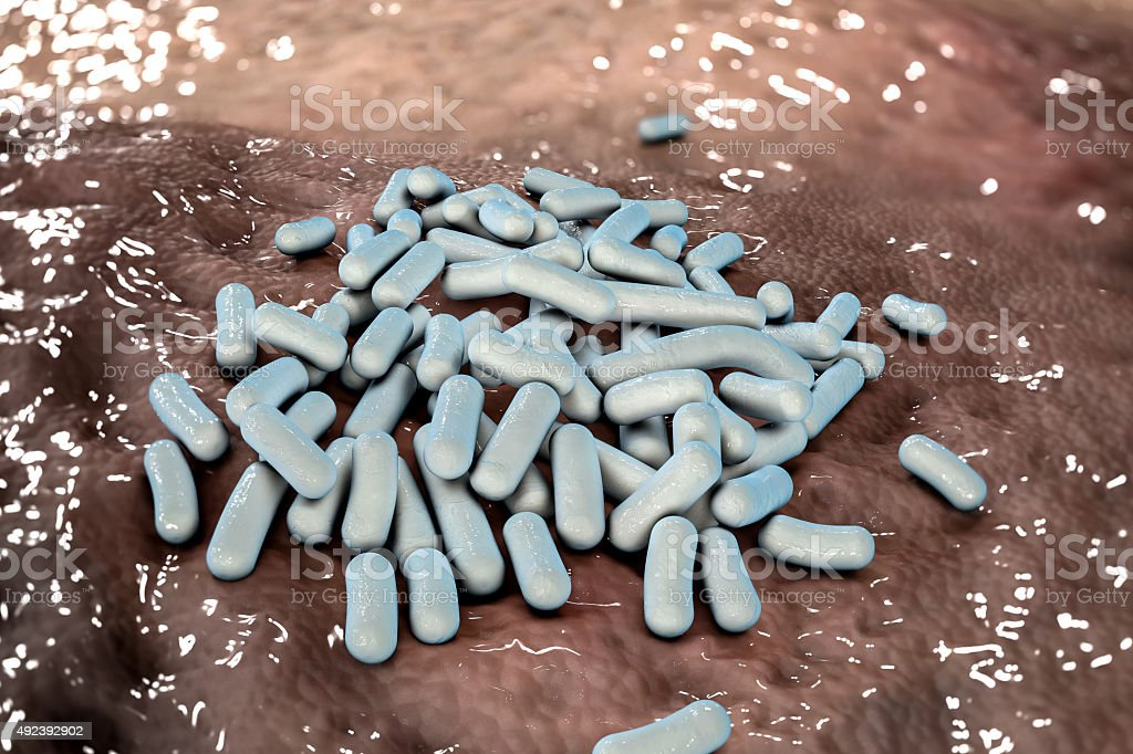 Lactobacillus bacteria stock photo