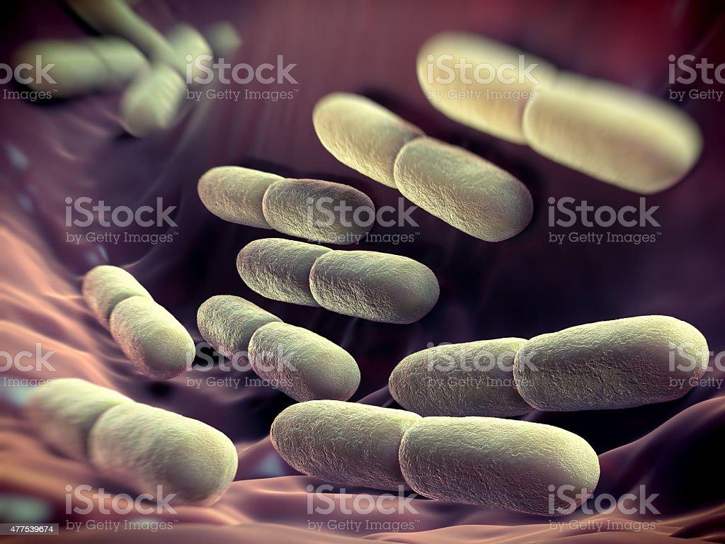 Lactobacillus bulgaricus bateria stock photo