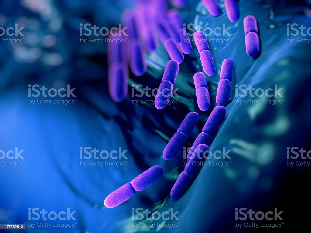 Lactobacillus bulgaricus bateria - Photo