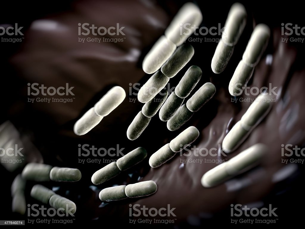 Lactobacillus bulgaricus bateria stock photo