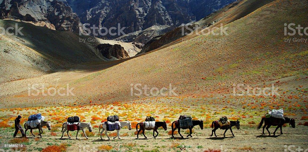 Ladakh stock photo
