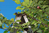 Wooden ladder up an apple tree