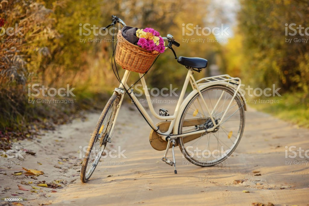 Ladies bike with a bouquet of flowers and hat in a basket with autumn trees behind. стоковое фото