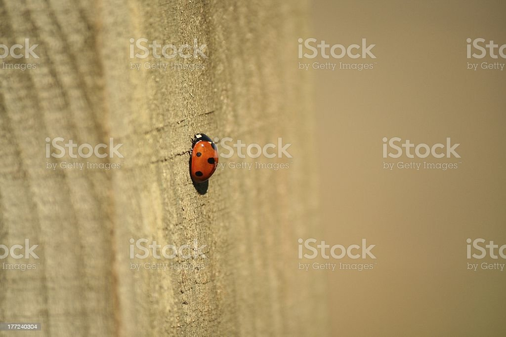 lady bug ladybird on wooden post stock photo