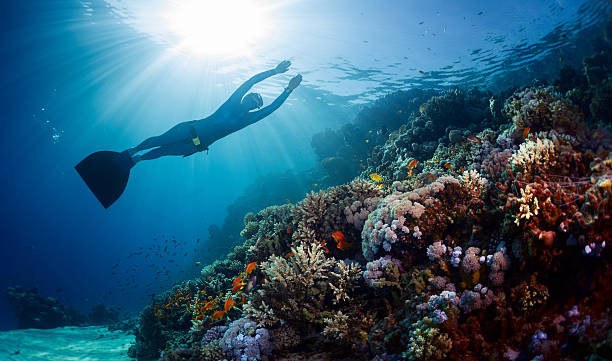 lady freediver gliding underwater - freitauchen stock-fotos und bilder
