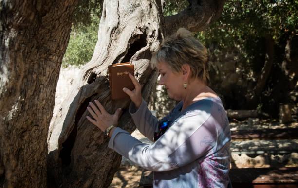 Lady praying at olive tree in Garden of Gethsamane stock photo