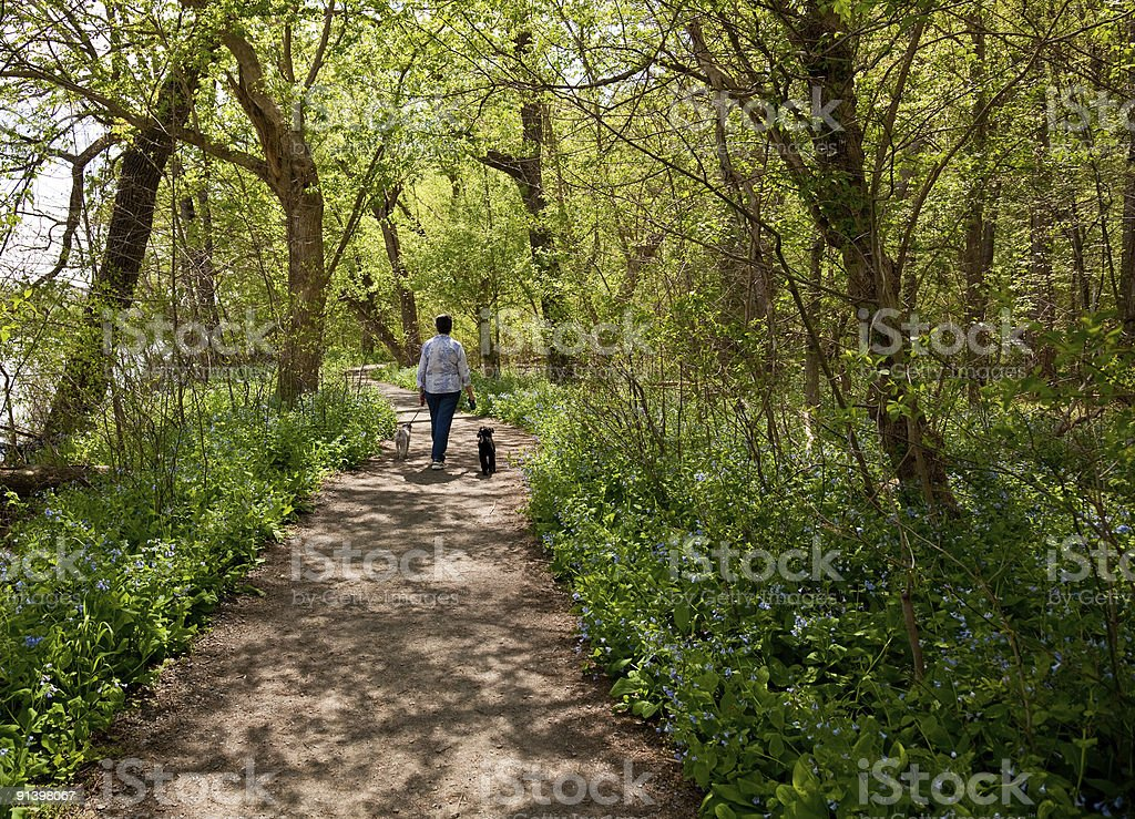 Lady with dogs on path in Bluebells royalty-free stock photo