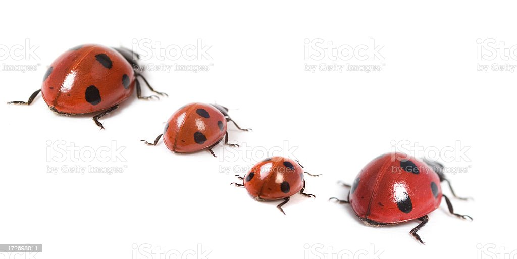Ladybird family royalty-free stock photo