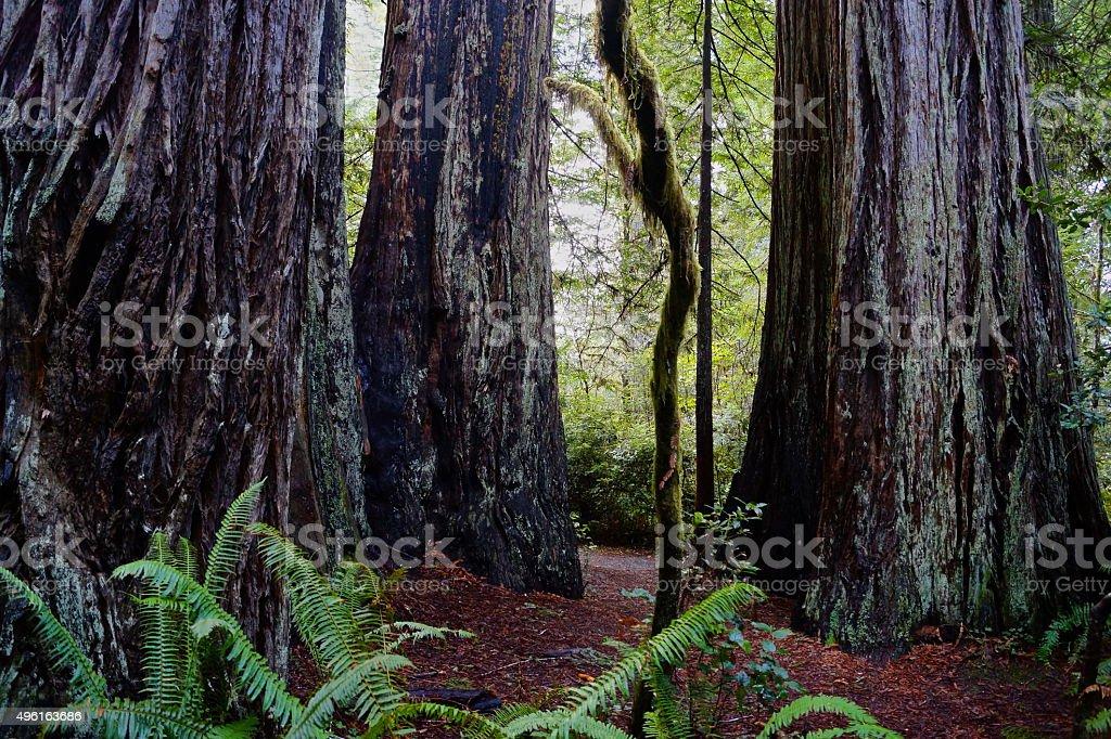 Ladybird Johnson Trail stock photo