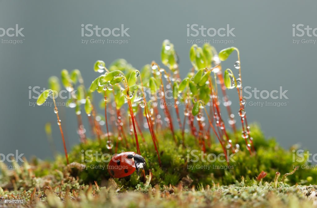 Ladybird rests under moss patch stock photo