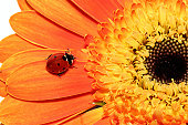 Ladybug in nature