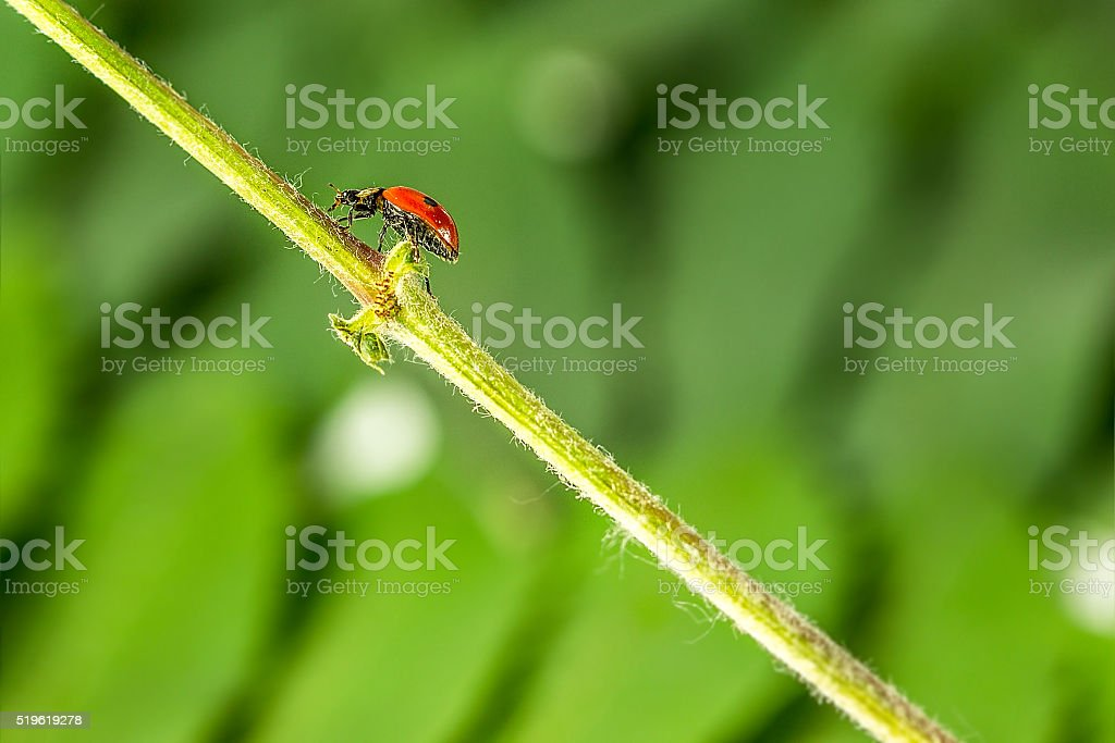 ladybug in the grass in nature stock photo