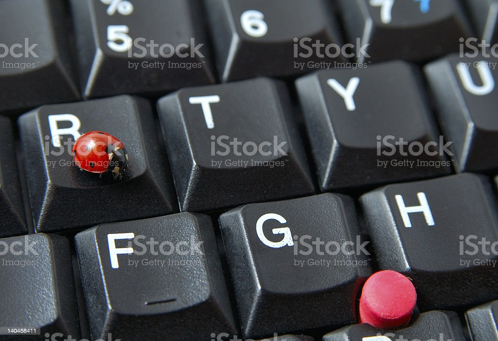 Ladybug meets pointer royalty-free stock photo