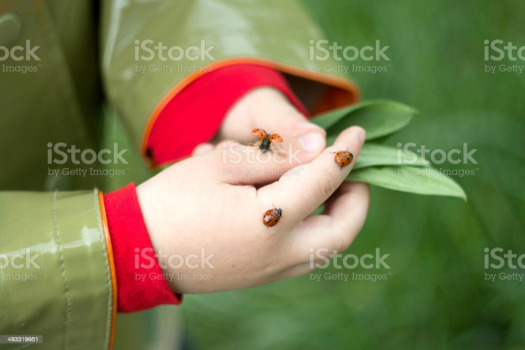 ladybug on a children's palm stock photo