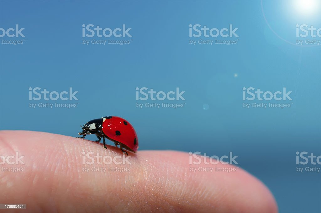 ladybug on a finger royalty-free stock photo