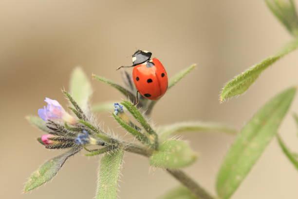 A ladybug on a flower stock photo