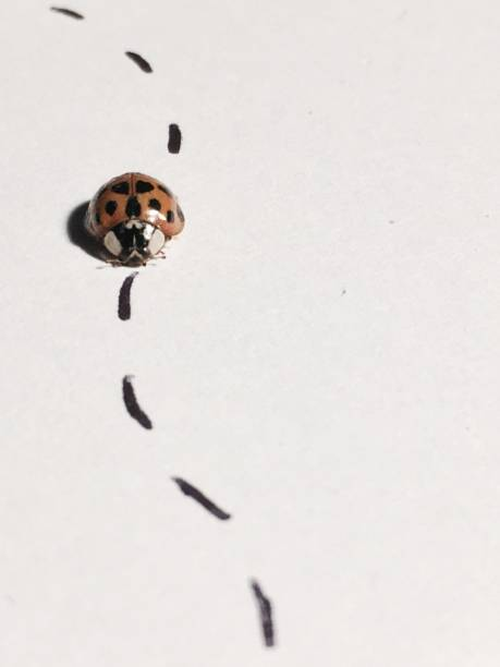 ladybug on a journey - dotted line stock photos and pictures