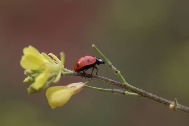 A ladybug on a yellow flower branch