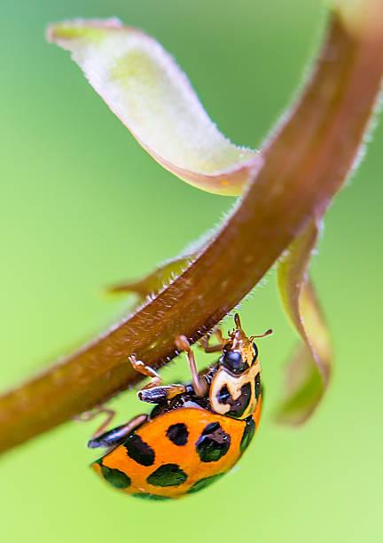 Ladybug on bush stock photo