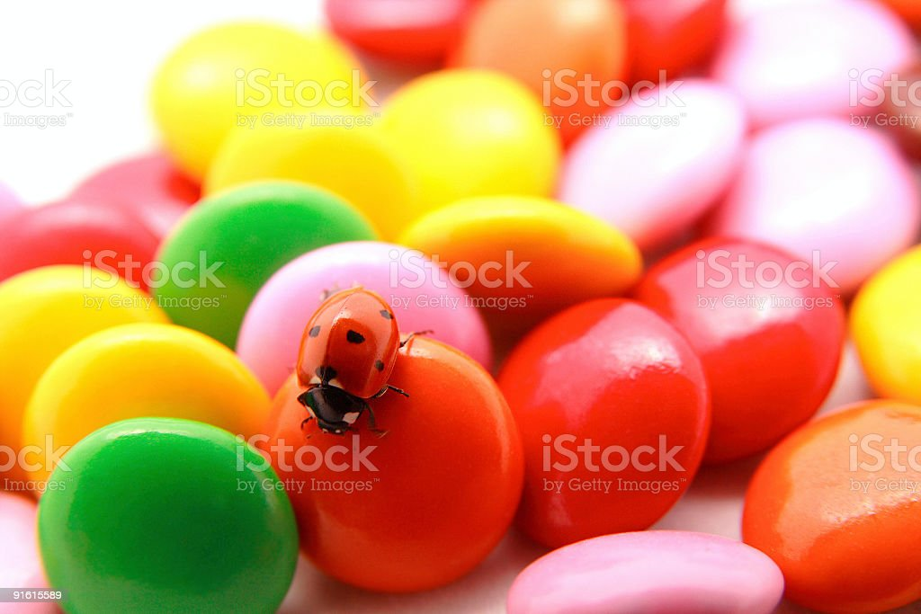 Ladybug on the chocolate candies royalty-free stock photo