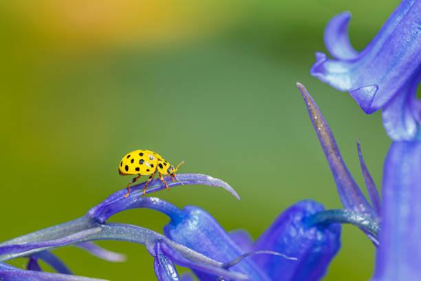 Ladybug resting on flower stock photo