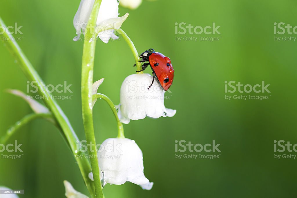 ladybug sits on a flower stock photo