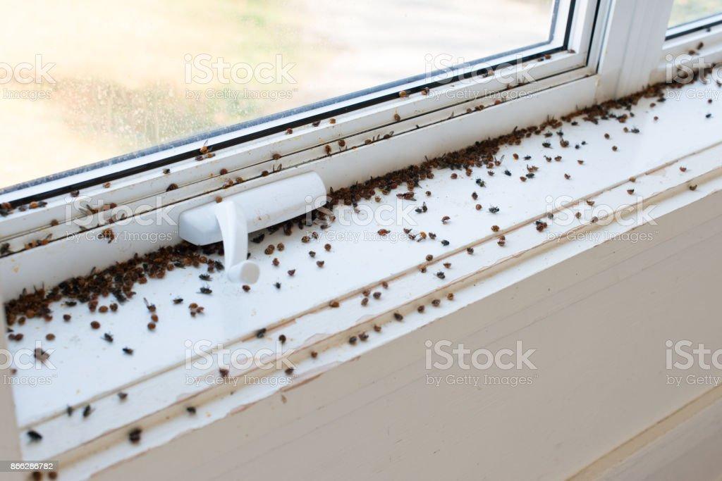 Ladybugs and Flies stock photo