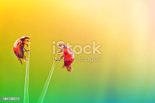 Ladybugs in Love - Sun Light Effect