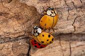 Beautiful cute ladybug on fern on orange background