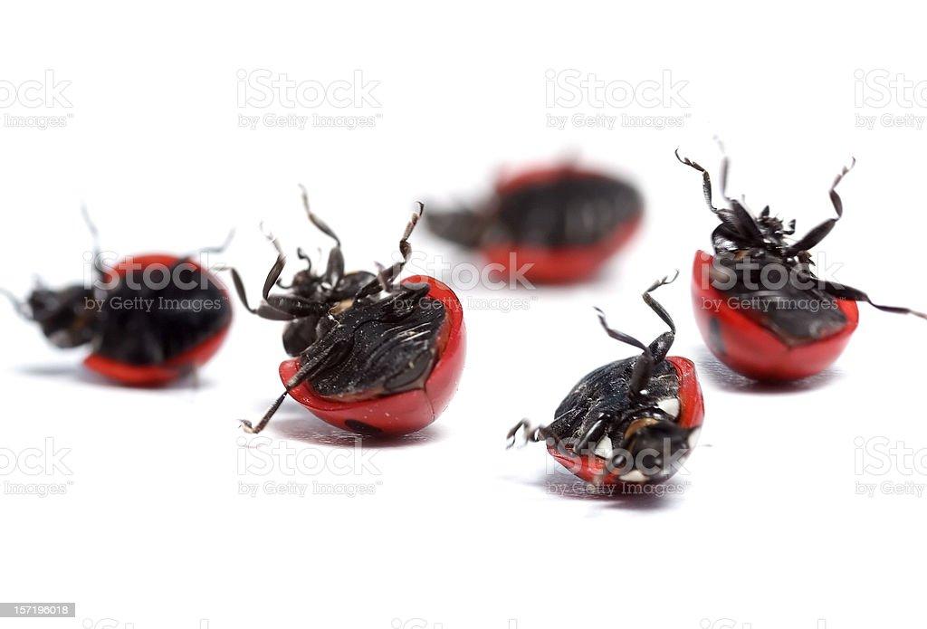 ladybugs need help! royalty-free stock photo