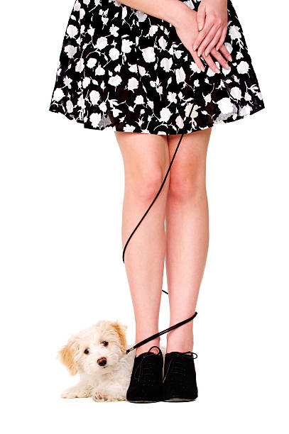 Lady's legs tangled with a puppy on black lead stock photo