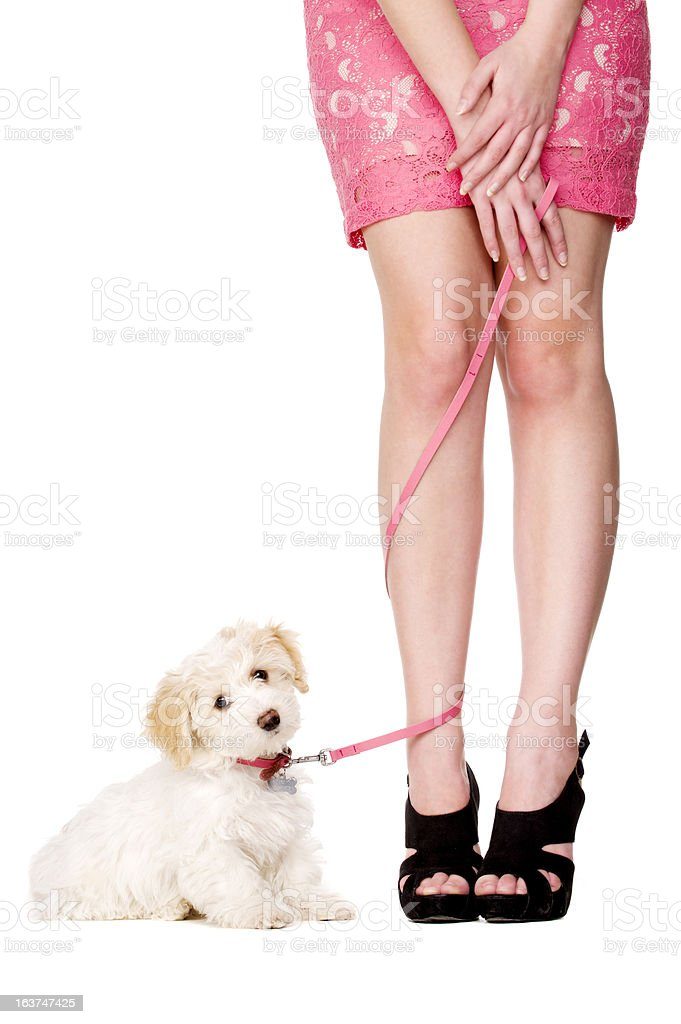 Lady's legs tangled with a puppy on pink lead stock photo