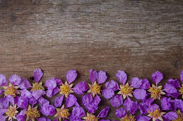 Lagerstroemia floribunda or kedah bungor top view on wooden background stock photo